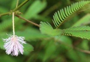 Flower_Kesarval-Spring-Goa